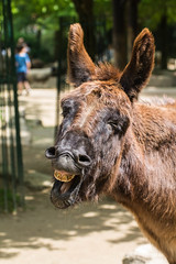 Opel Zoo 21.5.2016-505 (flummylein85) Tags: esel opelzoo streichelzoo