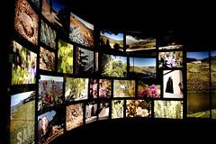 """seen in """"Port wine Sandeman"""" Porto Portugal (dl1ydn) Tags: color landscape blumen dia capture werbung landschaft farbe bilder wein weinberge"""