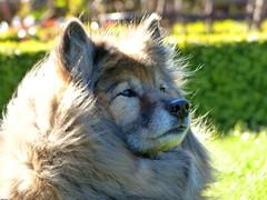 Pfotenfreunde-Wandertag (isajachevalier) Tags: dog hund haustier tier