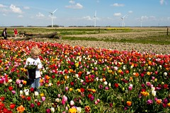 _DSC2786 (durr-architect) Tags: sky plant flower color colour field bulb landscape bright outdoor flowerbed tulip fields serene dronten flevoland oostelijk