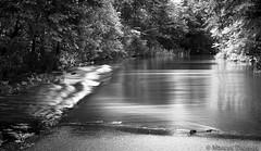 Acqua-Alta_8 (Marcus-Thomas) Tags: wasser sommer fluss wald rhein bume speyer rheinauen