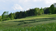 auf dem Kornberg - Schwbische Alb DSC_8163_W_16_9_V1 (Roland707) Tags: kornberg schwbischealb badenwrtemberg nikond600