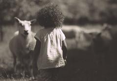 Sheep Whisperer (!Kevin!) Tags: portrait playing girl sheep zeeland bighair curious curlyhair ayana sheepwhisperer