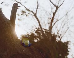 Enjoy the sunshine ( ) Tags: film 50mm kodak taiwan frog 100 135 ricoh xr f17 kr5sv profotoxl