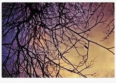 0163 (AzmirRahman) Tags: alexandria silhouette sunrise lens nikon 28mm earlymorning egypt e series 100 treebranches xl bfe 2012 profoto fm2n 28 135format azmirrahman 6march2012 ilm