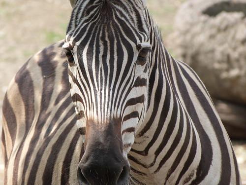 Tire Zoo
