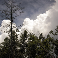 Cumulonimbus Clouds (h_roach) Tags: trees sky storm nature rain weather clouds forest square thunderhead threaten cumulonimbus