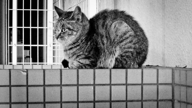 Today's Cat@2012-03-13