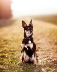Sun on my Back (der boche) Tags: dog pet rocky hund haustier freund highqualitydogs stefanbochnig