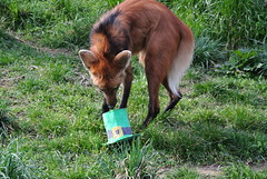 On St. Patrick's Day, National Zoo Animals Fin...