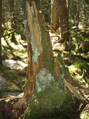 De Composition in Shades of Green... (nimbus55) Tags: winter ontario ice forest moss peat coldcreekconservationarea