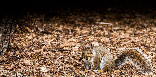 Are there still red squirrels in the Botanic Gardens? [NO]
