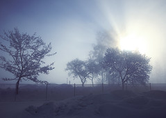 Flash of light (Barry_Madden) Tags: trees sunlight snow fog fence
