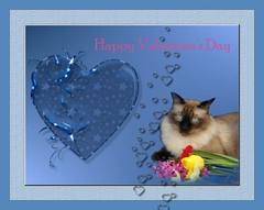 Happy Valentine's Day (*Toia*) Tags: catnipaddicts