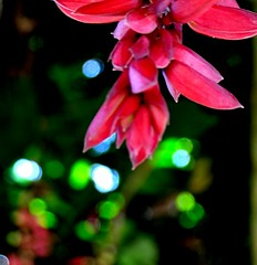 A Light in The Dark Shining Your Love.. (-Reji) Tags: light inspiration flower love beautiful forest dark nikon truth glow shine wind you bokeh lies kerala always lovely shining better tender because inspiring guesthouse gavi d90 pathanamthitta rejik keralavisitdecember10