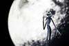 The Nightmare Before Christmas (Yon Garin  Fotógrafo · Argazkilaria) Tags: movie dolls musical jackskellington timburton thenightmarebeforechristmas pesadillaantesdenavidad