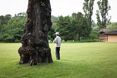 Man and Tree, Mangyongdae (openbox) Tags: man tree korea northkorea pyongyang mangyondae