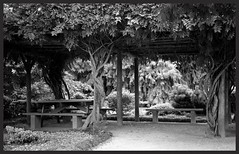 A cool place to sit (Deb Jones1) Tags: park travel trees bw green monochrome beauty canon garden botanical flora australia places vista flickrduel debjones1