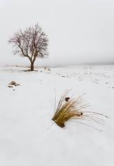 (Antonio Carrillo (Ancalop)) Tags: españa white snow tree blanco fog canon landscape arbol la spain europa europe mark nieve foggy paisaje ii l 5d lopez antonio niebla 1740mm carrillo albacete castilla mancha ancalop