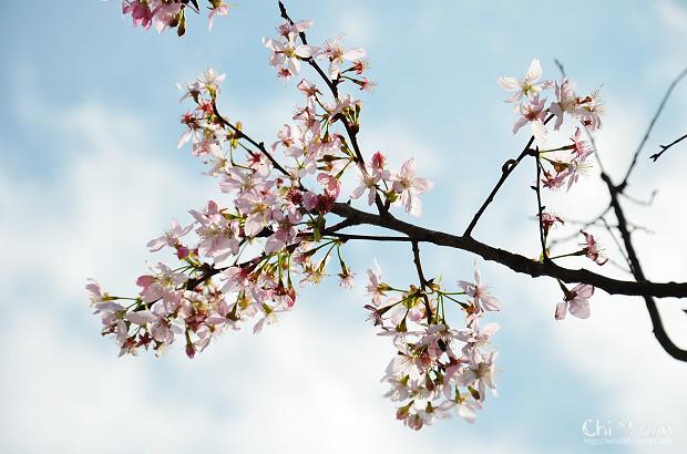 2012陽明山花季25.jpg