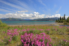 Beautiful, Pristine Yukon (kcezary) Tags: travel vacation canada tourism canon landscape outdoors holidays places paisaje yukon paysage landschaft      5photosaday ef24mmf28 canonprimelens canon5dmkii mylensdb