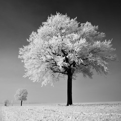 freezing fog 2 (pierre hanquin) Tags: trees winter light sky bw snow tree nature field landscape geotagged nikon europa europe belgium belgique noiretblanc hiver champs belgi ciel arbres fields neige paysage landschaft arbre lige wallonie 1685 hannut 1685mm d7000 1685mmf3556gvr magicunicornverybest magicunicornmasterpiece hanquin