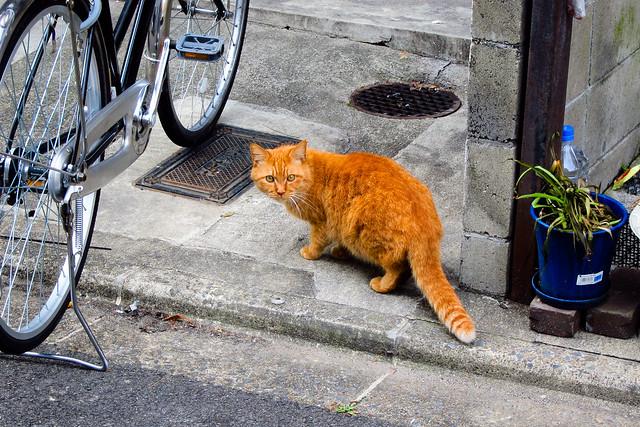 Today's Cat@2012-02-22