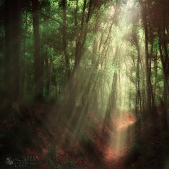 heaven comes... (ildikoneer) Tags: summer nature forest landscape rays tress sunray