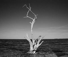 Time (Jadydangel) Tags: ocean life wood sea sky blackandwhite tree beach water dead bay waves branches horizon driftwood twisted jadydangel
