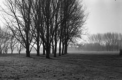 (giovanegian) Tags: leica morning winter italy sun frost tranquility calm silence hood modena chill m5 absence agfarodinal 2125 ilfordf4 leicasummilux50mmf14 1120c expiredmaybeatadamandevestimes