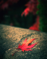 Autumn Delights (Fuji and I) Tags: autumn red leaves maple seasons naturre alexarnaoudov