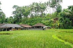 Temple Farm (Keith Mac Uidhir  (Thanks for 4m views)) Tags: bali food plant elephant green nature field grass indonesia asian religious island asia asien rice natural paddy farm buddha buddhist south religion farming goa grain buddhism east jungle cave asie agriculture ricefield gajah indonesian aasia asya  indonesi indonesien ubud balinese azia azi  sia indonsia  indonsie    chu indonezja      endonezya   zsia  indonesya  indonzia indonezia     indunisia