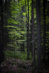 Parcul Natural Apuseni (RottenStagg) Tags: castle natural romania rumania apuseni parcul 2011 hunedoaras