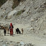 "Woman Walking Goats <a style=""margin-left:10px; font-size:0.8em;"" href=""http://www.flickr.com/photos/14315427@N00/6986240433/"" target=""_blank"">@flickr</a>"