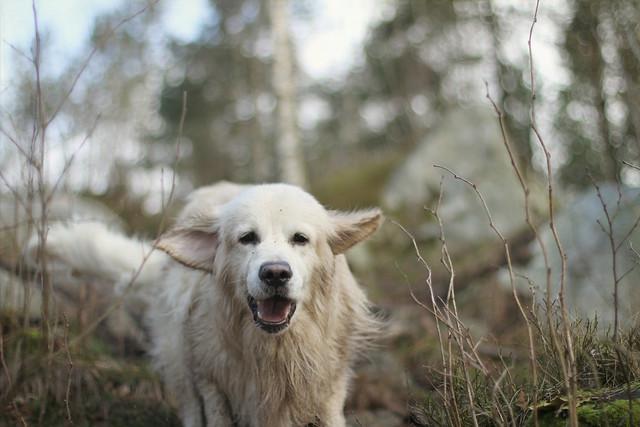 I hundeskogen