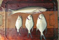 17 - Raw fishes in a cutting board. (pedropapini) Tags: wood sea food fish gabriel animals de dead photography photo foto corte board pedro peixe cutting fotografia fishes madeira peixes martinho tabua papini