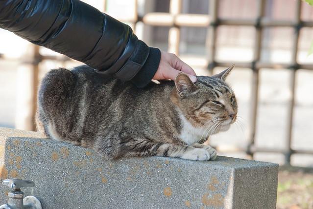 三渓園に住んでる猫|
