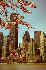 A beauty called Chrysler (SiddharthDasari) Tags: newyork art architecture cherry island spring skyscrapers blossom manhattan roosevelt april chrysler deco