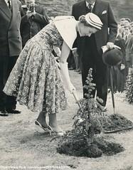 H.M.Queen Elizabeth planting a tree (romanbenedikhanson) Tags: photo 1957 summerdress queenelizabeth elegance 1950sfashion britishroyalfamily originalphoto britishroyalty millhillschool visittoschool plantsatree