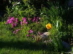 P4202791.1 (bratispixl) Tags: germany licht oberbayern schatten farben frhling tulpe chiemgau lichtwechsel traunreut stadtrundweg bratispixl belichtungsproben