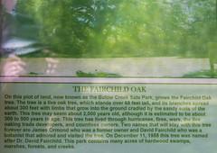 DUC_6742r (crobart) Tags: park tree creek oak state florida live fairchild bulow