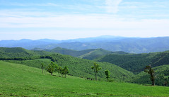 - Fine plateau. (shig.) Tags: trees sky cloud mountain tree green field clouds canon eos cow cows outdoor plateau  70d