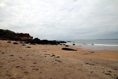 2016 - 16.5.15 Gullane Beach (32) (marie137) Tags: trees sea horses cloud sun flower castle beach dogs animals rock landscape sand berry ben bass harbour ruin gsd marie137