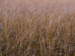 Pajas en Lago Negro (Mauro Pesce) Tags: chile patagonia texture straw olympus textures thatch laguna paja negra texturas straws lagunanegra omd aysen m43 pajas em5 mirrorless puertosanchez puertosnchez