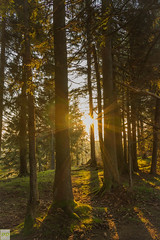 Sun is shining and so are you... (Dominik.D - Photography) Tags: trees sun nature forest sunrise canon outside lights outdoor natur explore landschaft sonne wald bume sonnenaufgang schwarzwald blackforest baum lichter schauinsland doubled canon600d