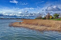 Blick auf die Puddeminer Wiek (garzer06) Tags: deutschland wasser wolken insel grn braun blau ufer rgen schilf vorpommern wellen naturephotography mecklenburgvorpommern weis landscapephotography naturfoto inselrgen wolkenhimmel landschaftsbild landschaftsfotografie puddemin puddeminerwiek
