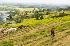 sawah 10 (Fakhri Anindita) Tags: bali nature field indonesia landscape photography nikon farm ubud sawah jatiluwih