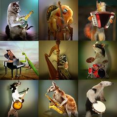 Nine stars of music (jaci XIII) Tags: dog co cat mantis monkey squirrel rat guitar pandeiro praying battery piano trumpet banjo cricket violin gato kangaroo bateria macaco harp tambourine esquilo rato harmonica anteater violo violino tamandu canguru gaita grilo trompete harpa louvadeus