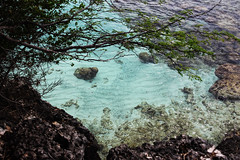 Fish in the blue water (martijnbremer96) Tags: blue tree nature water rocks fisk bonaire