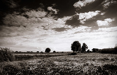 Summer breeze (gernot.glaeser) Tags: sky blackandwhite nature monochrome clouds germany landscape europe explore deu